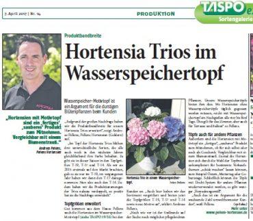 Die Taspo berichtet über Hortensia Trios im Wasserspeicher