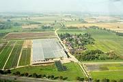 Luftaufnahme des Betriebs Pellens Hortensien