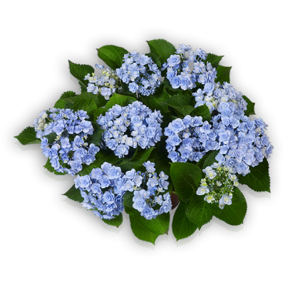 You & Me® Forever(s) blau oben