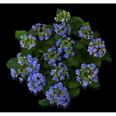 You & Me® Romance(s) blau Oben