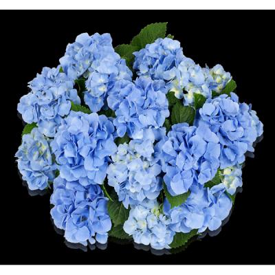 Baby Blue(s) Oben
