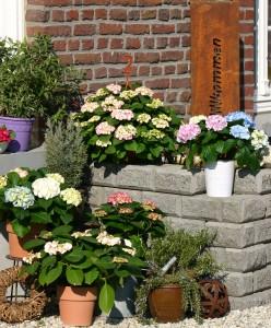 Blühender Topfgarten mit Produkten von Hortensia