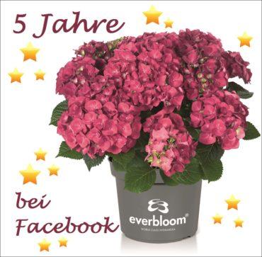 5 Jahre Everbloom bei Facebook
