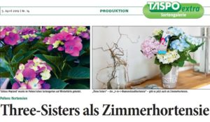 Taspo Zimmerhortensien Hortensia Three Sisters Colour Club